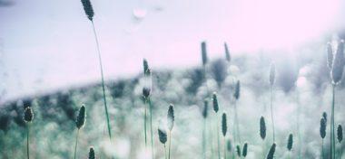Czy alergia na pyłki jest uciążliwa?